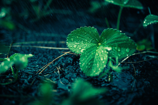 Photo: Mikael Christenson. / Unsplash (CC),leaf. wet, ground