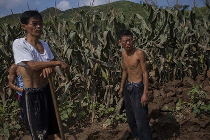 Men stand in a cornfield in Songchon County, North Korea, 13 August 2012. / David Guttenfelder