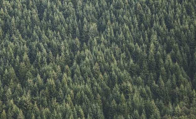 Photo; Samuel Scrimshaw (Unsplash, CC),wood, forest,