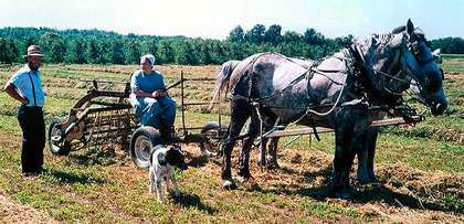 The Amish bring economic value to the rural communities where they live.