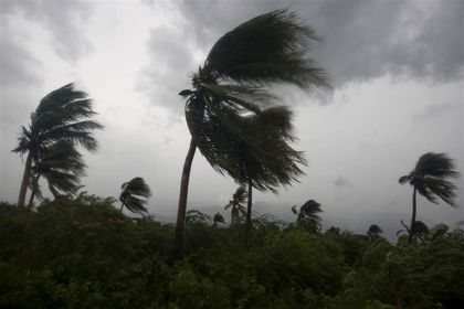 The wind blows coconut trees during Hurricane Matthew in Port-au-Prince, Haiti. / AP