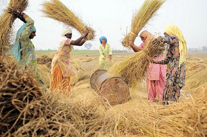 Women working in a rural region of India. / Ciat (Flickr, CC)