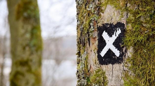 Photo: David Paschke (Unsplash, CC),route, forest