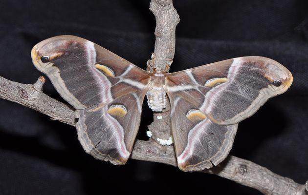 Moth. Photo: Antonio Cruz,