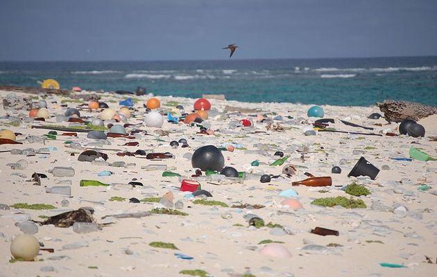 A beach full of plastic debris. / Wikimedia Commons,