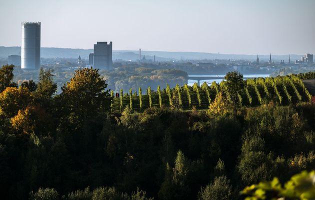 The WEA Sustainability Center (WEASC) is in the German city of Bonn. / WEA,