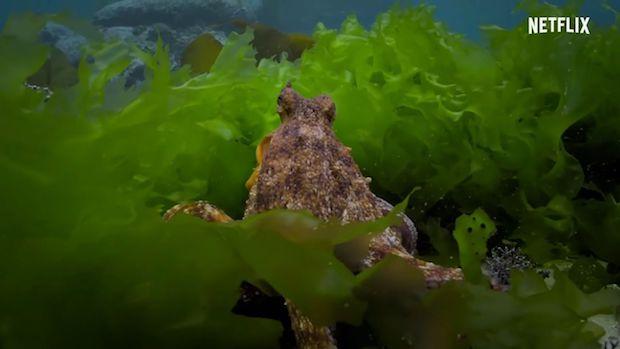 'My Octopus Teacher': Echoes of grace